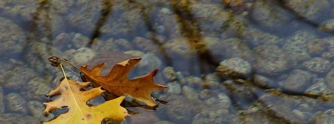 leaves_in_stream