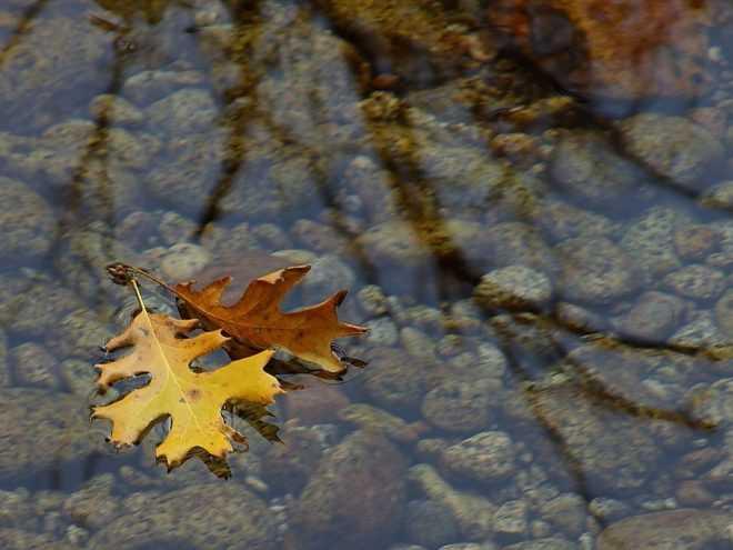 leaves_in_stream