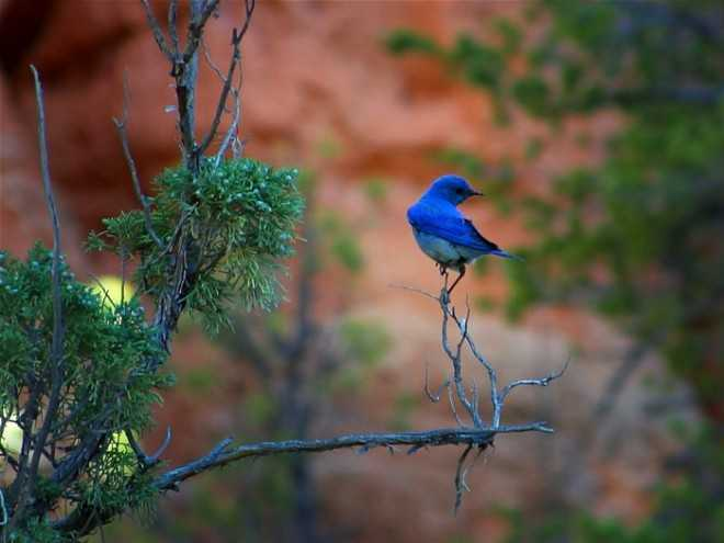 blue_bird_labor_of_love